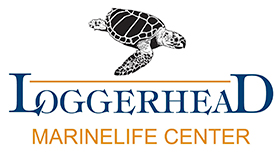 Loggerhead Marinelife Center Logo